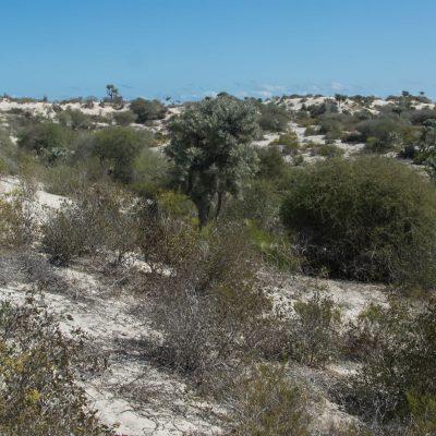 Aepyornis habitat