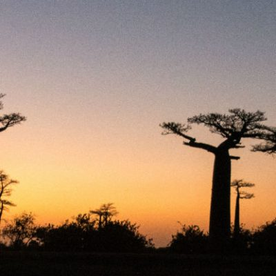 Baobabs Avenue