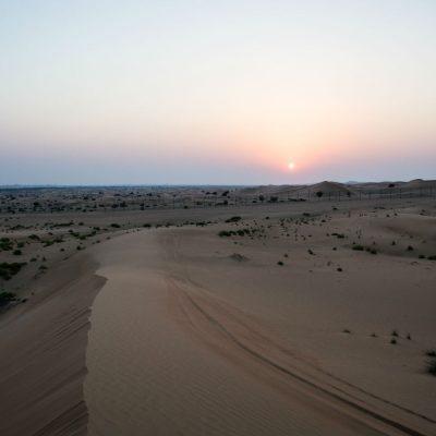 desierto con Zygophyllum
