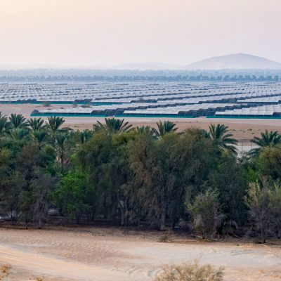 NARC granjas de avutardas