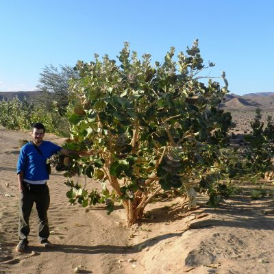 2013 - Sahara desert