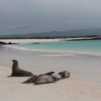 2015 - San Cristobal island, Galápagos