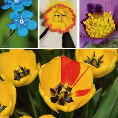 Central european flowers (Czech Republic)