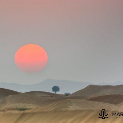 Sunset with Prosopis cinerea (UAE)