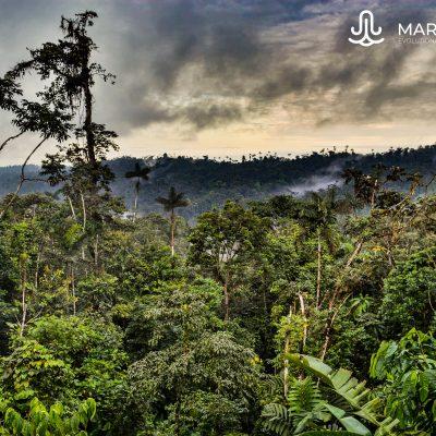 Selva de bilsa (Ecuatorian Choco)