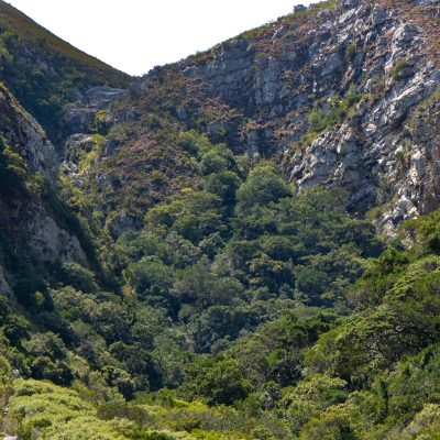 Leopard´s Kloof - Afromontane forest patch