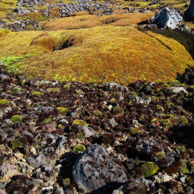moss balls and Azorella