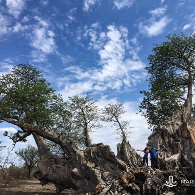 Baobab in Tsumkwe