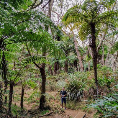 Bébour forest
