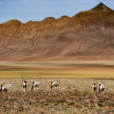 Central Namib desert