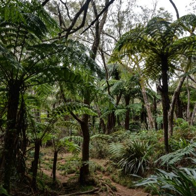Forêt de Bébour