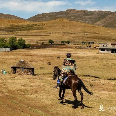 Lesotho horse