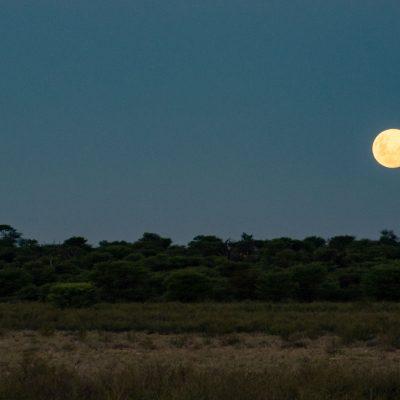 Kalahari moon