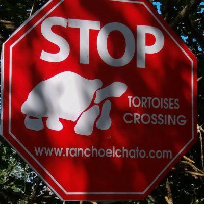 Tortoises crossing