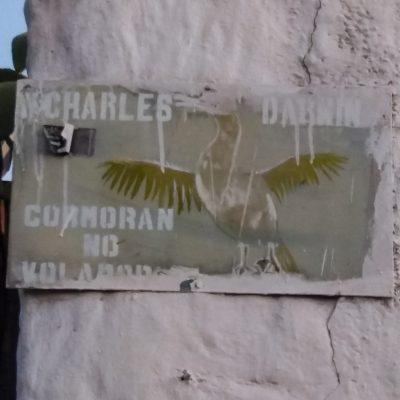 Flightless cormorant street