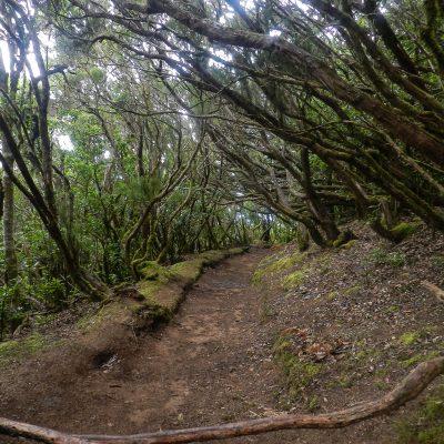 Anaga laurel forest