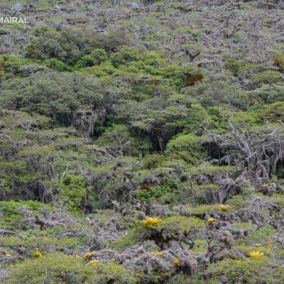 Bosque seco Jerusalém