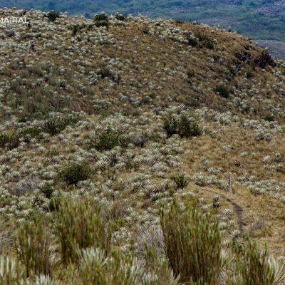 Páramo Chingaza