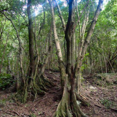 Monteverde in La Palma